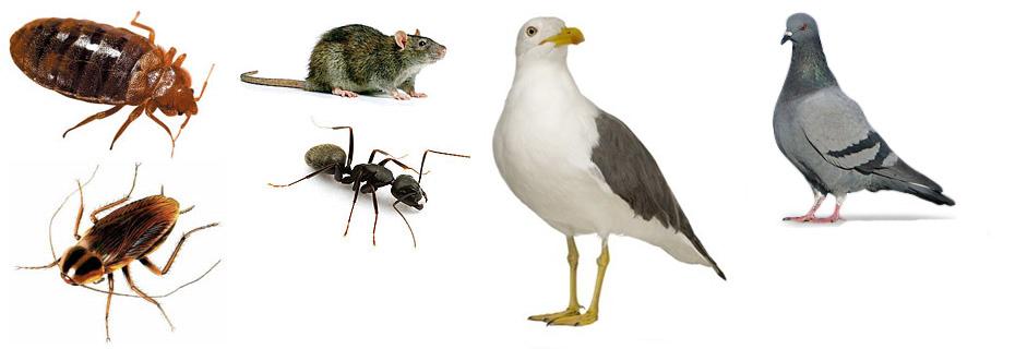 filet capture oiseaux